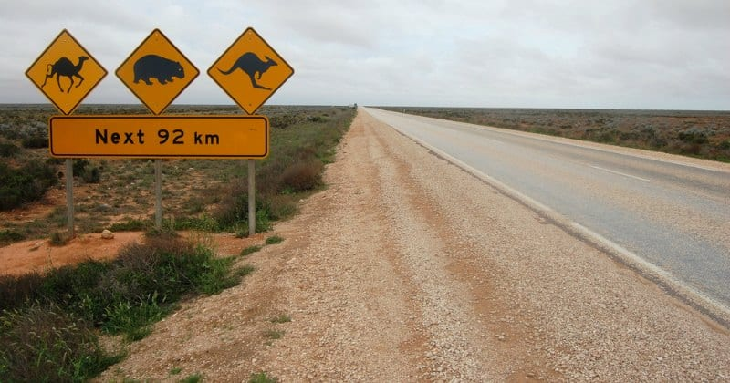Animal Road Sign in Australia