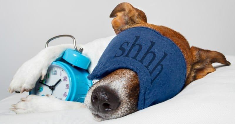 DOG WITH SLEEP MASK AND ALARM CLOCK